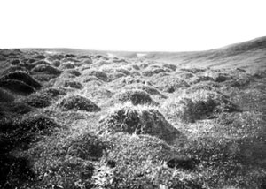 Photo depicts a group of hummocks.